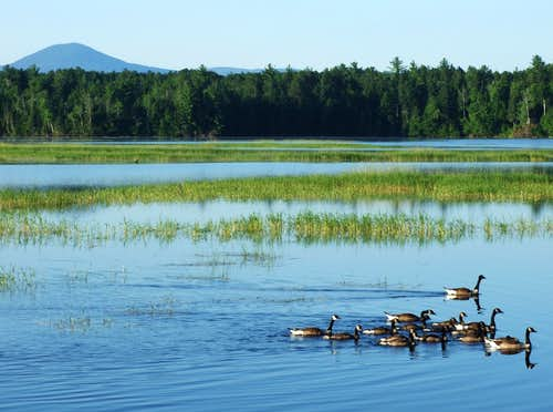 Canadian Geese on Flagstaff Lake