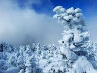 Frozen Spruce On Moosilauke