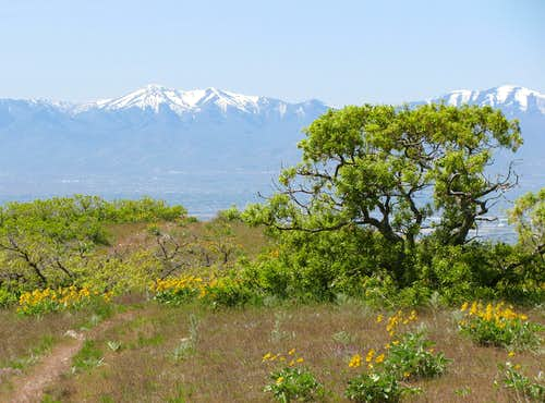 Oquirrh Mountains from Twin Peaks Trail