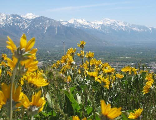 Avenue Twin Peaks Wildflowers
