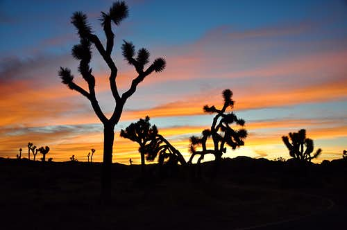 Sun sets on Joshua Tree