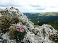 Ilgaz mountain flora, Turkey