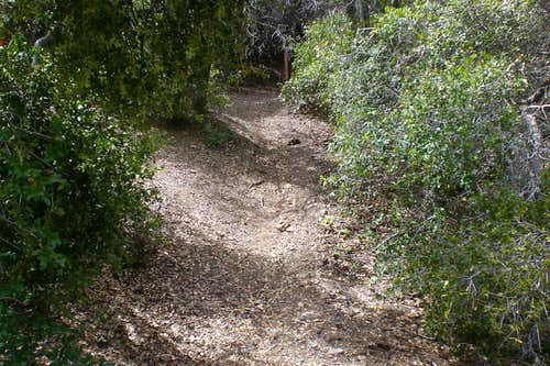 Typical Santa Ana Mountain Trail