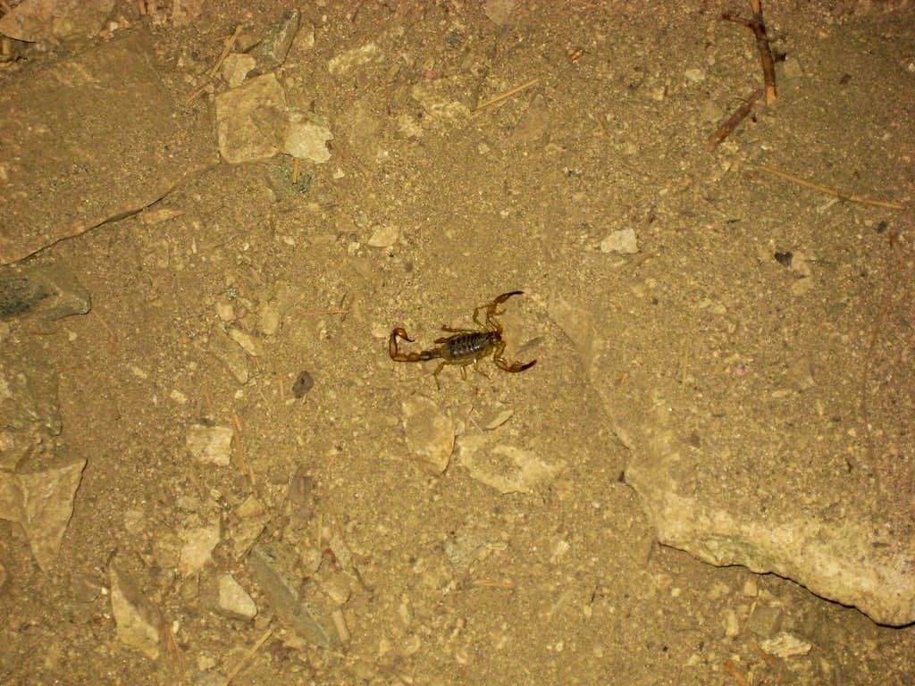Scorpion high on Baldy!