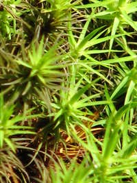Closeup of moss.
