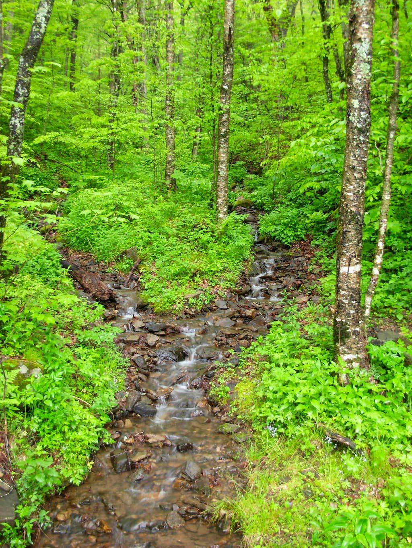 Springwater Stream