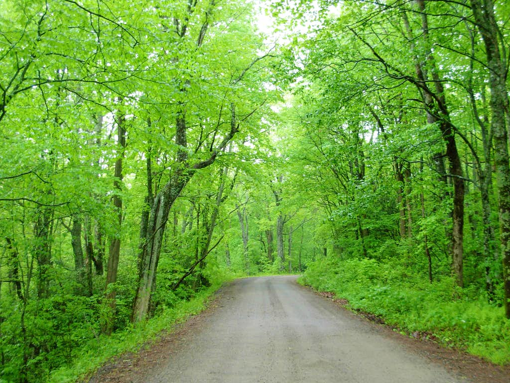 Forest Road 69