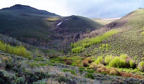 Upper Wilder Creek