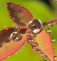 Dewdrops and raindrops