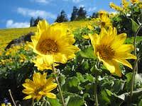 Flower showcase on Dog Mountain