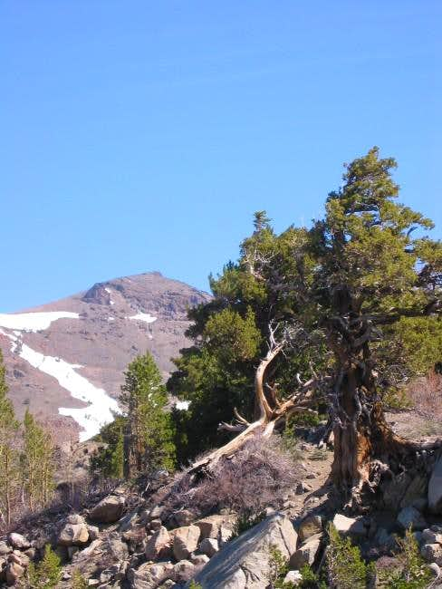 Red Lake Peak from the south,...
