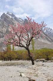 Dan Sam or Dum Sum Valley  Baltistan