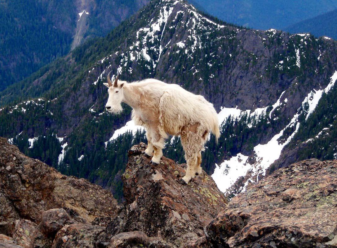 http://images.summitpost.org/original/518200.JPG