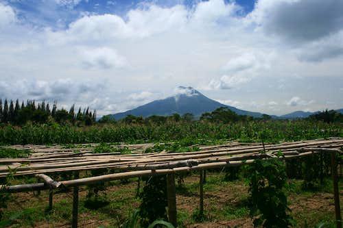 Gunung Sinabung from the Kutacane Road