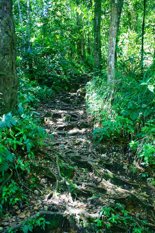 A good section of the path on the lower slopes of Gunung Sinabng