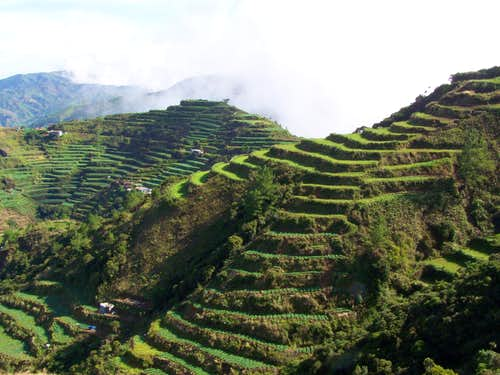 Cabbage terraces on Mt. Singakalsa