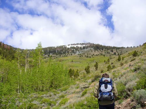 Heading up the Thomas Creek Trail