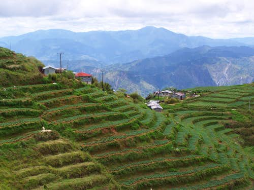 Cabbage terraces on the slopes of Mt. Kabuyao