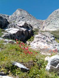 Red Indian Paitbrush near Mt. Bancroft