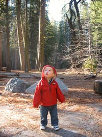 Admiring the Sequoias