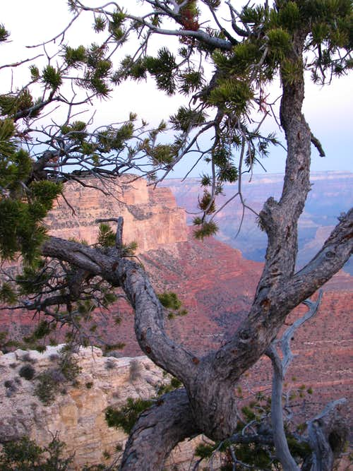 South Rim Trail View