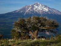 Mt. Shasta from Mt. Eddy