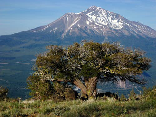 Mt. Shasta from Mt. Eddy