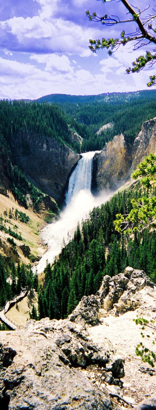 Lower Falls of Yellowstone - Vertical Shot
