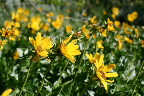 Flowery Trails