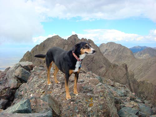 Duchess on the top of Crestone Needle, Colorado