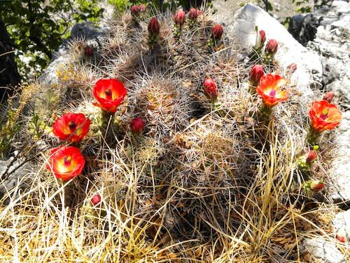 Guadalupe Peak 2009