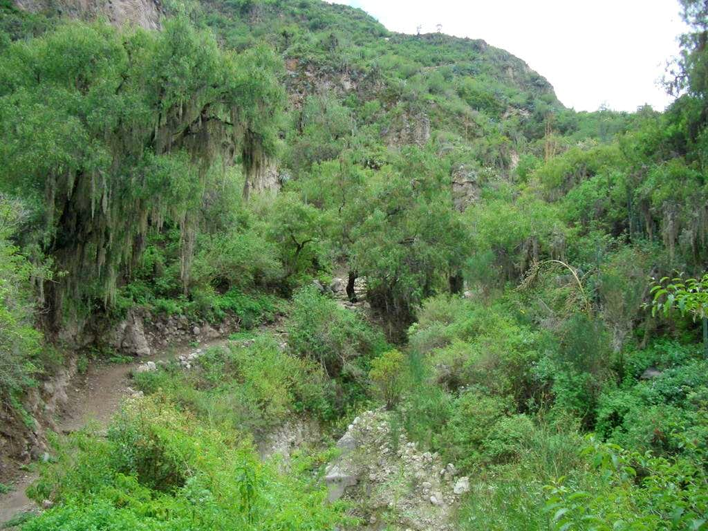 Trail From Antabamba To Tahuara