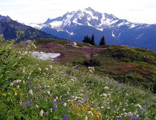 Shuksan and Wildflowers