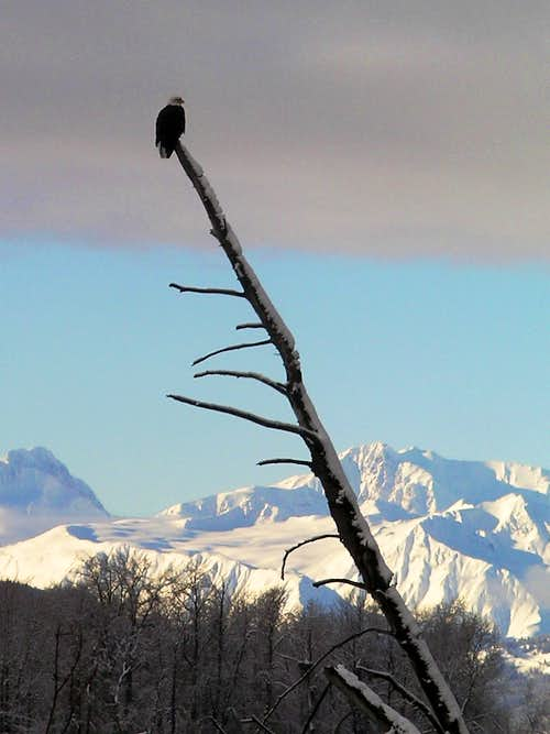 Chilkat Bald Eagle Preserve