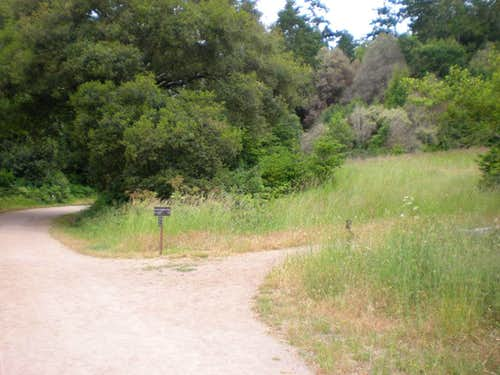 Start of the Mount Wittenberg Trail