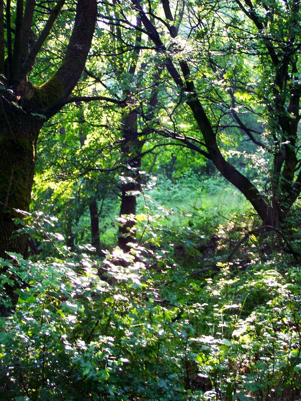 Forest after rain (in Vár-völgy)