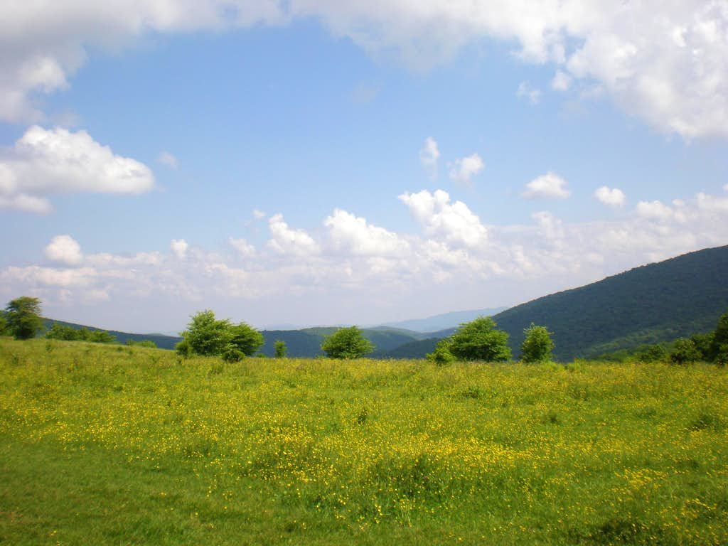elk garden Instantly search and view photos of all homes for sale in elk garden, wv now elk garden, wv real estate listings updated every 15 to 30 minutes.