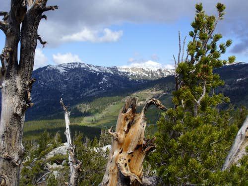 Jessie's Peak-Chickadee Ridge