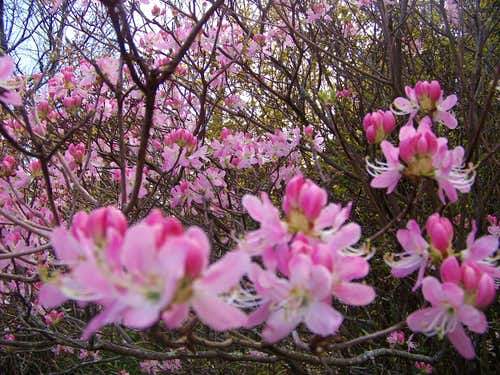 Blossoms in Abundance