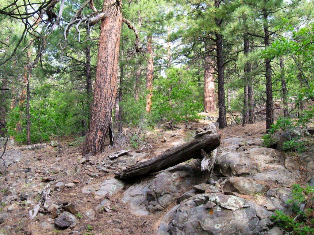Mt. Trumbull trail