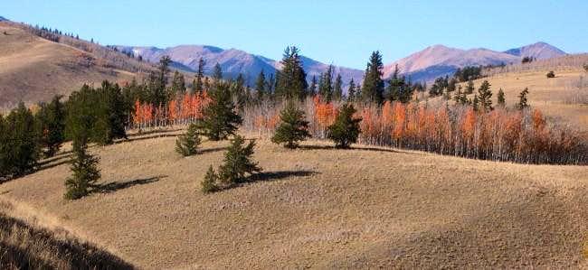 Fall in the Colorado Tarryall...