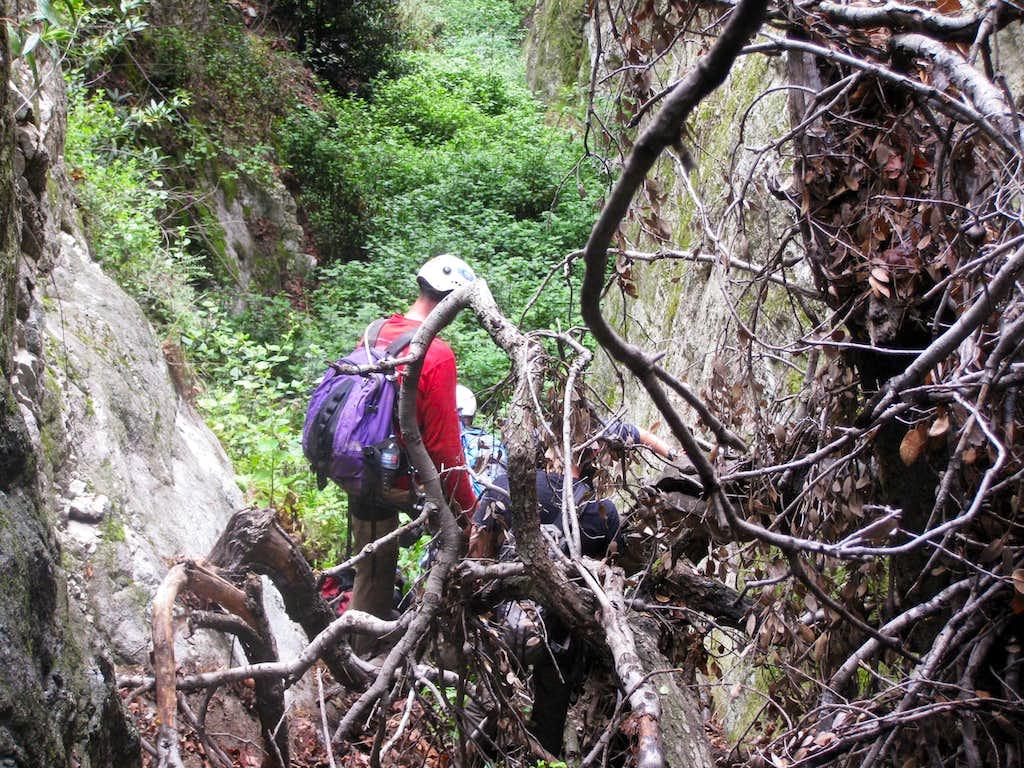Tree/log Choked Pasadena Glen Canyon