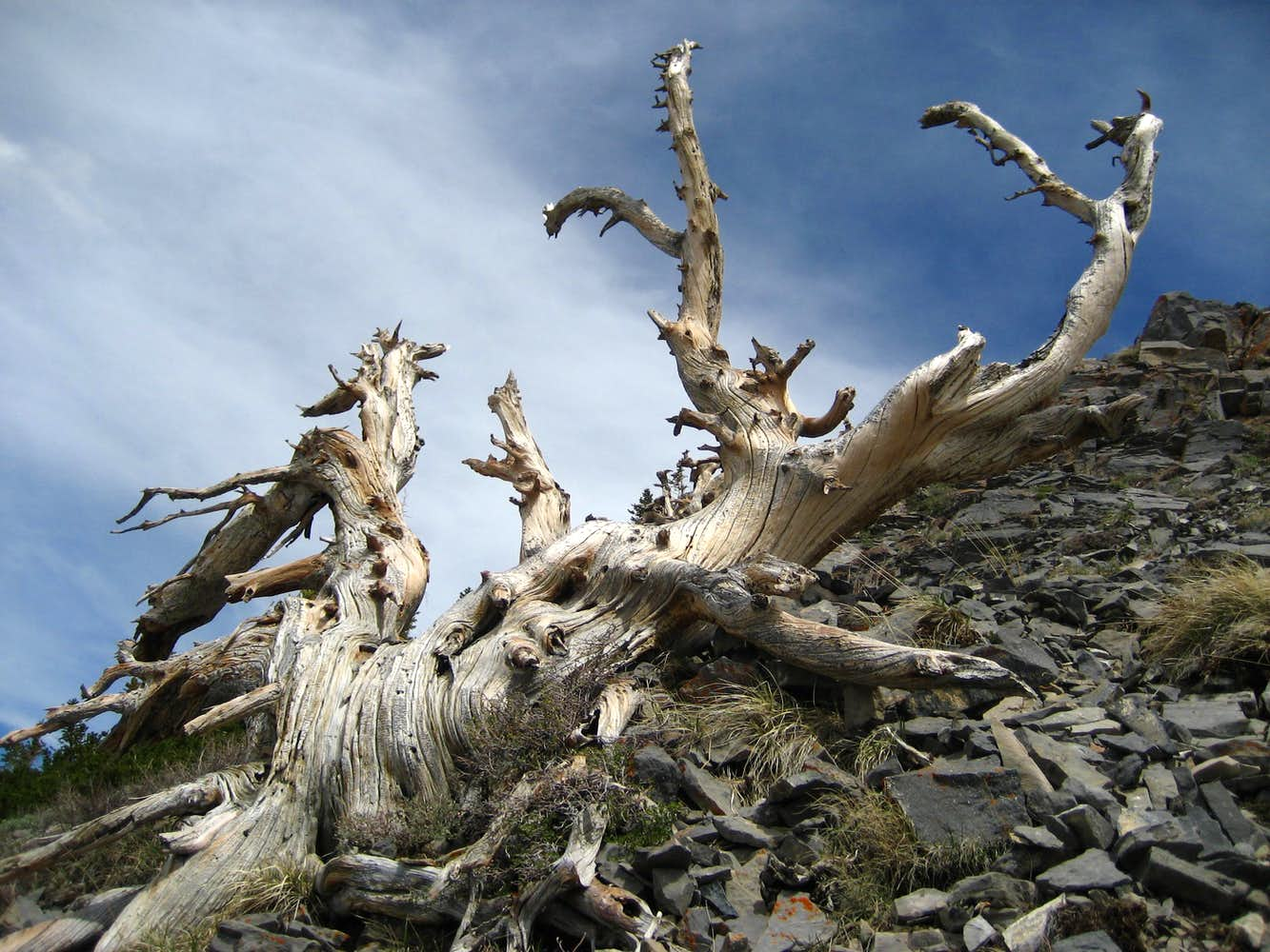 Dead tree in Death Valley by michela ravasio - Stocksy United