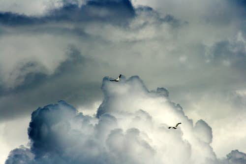 Pelicans and Clouds