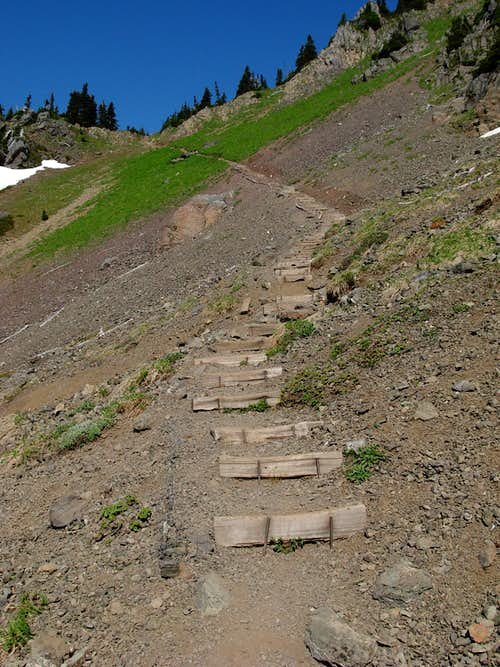 Mount Ellinor Trail