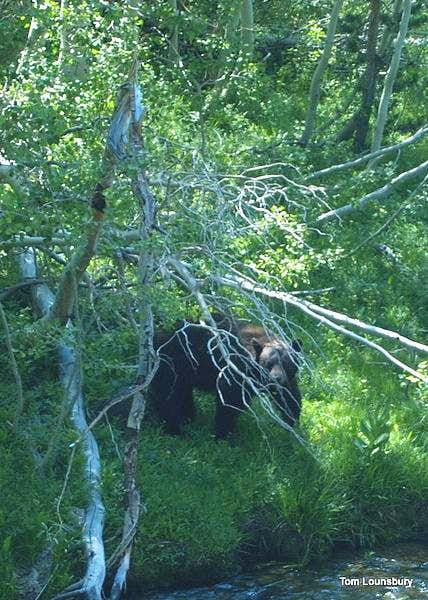 Bear along the Eagle Creek Trail