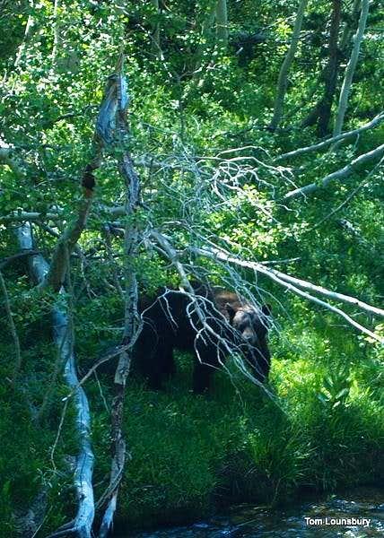 Bear along the Eagle Creek Trail