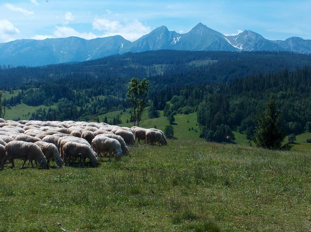 The Tatras from Spišská Magura