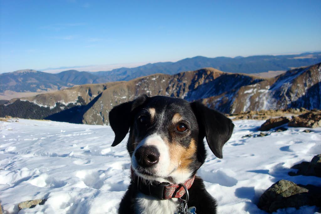 Duchess on top of Wheeler peak