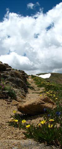 Vasquez Peak Wilderness Trail
